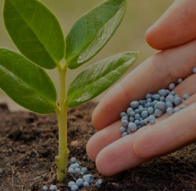 کشاورزی-بسپارشیمی-سپیدان